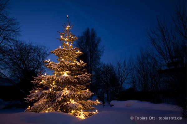 weihnachtsb ume weihnachtsbaum fotografien z b f r. Black Bedroom Furniture Sets. Home Design Ideas